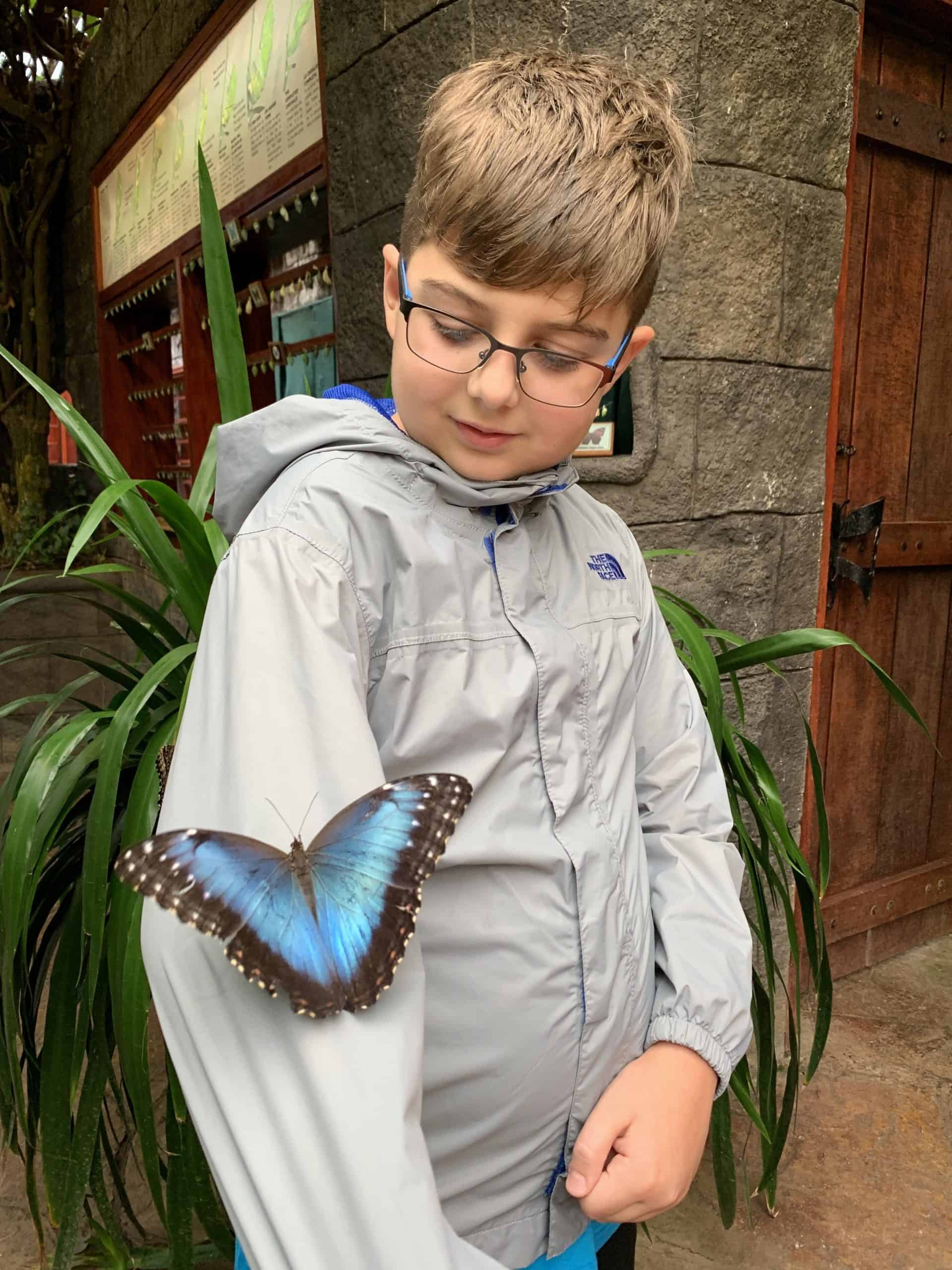 Child at butterfly exhibit at La Paz Waterfall Garden in Costa Rica