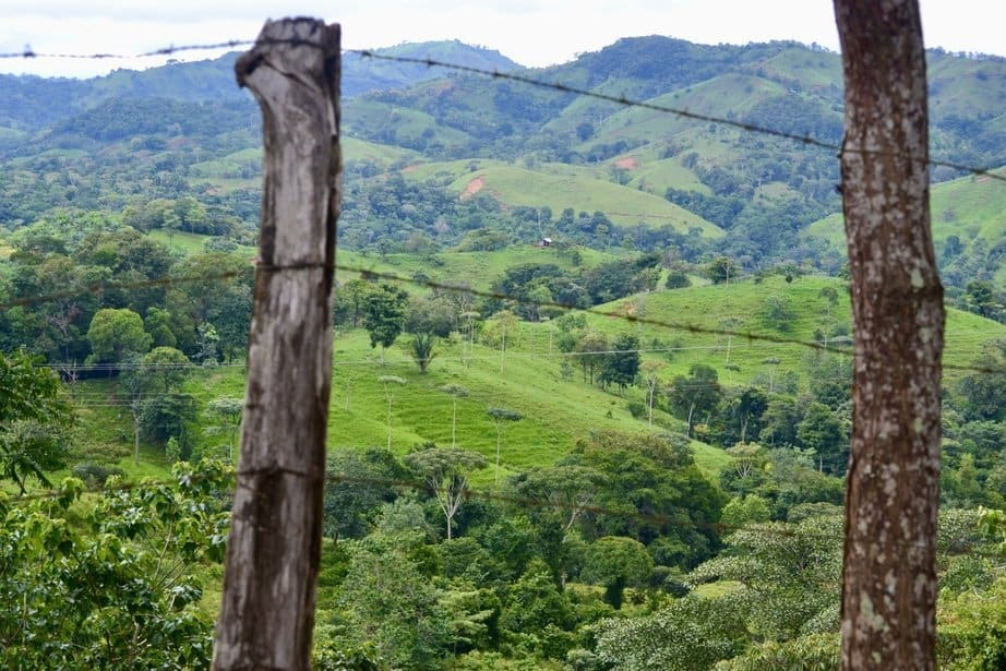 Roadside scenery of rolling hills in Costa Rican jungle